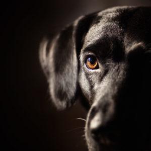 A black dog representing depression
